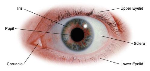 glaucoma consultants of texas | barbara smythe, md | glaucoma, Cephalic Vein
